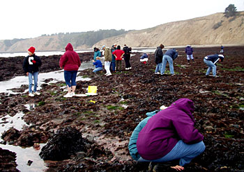 teachers and students exploring by the shore